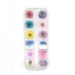 Xara Dry Flower Box No 01