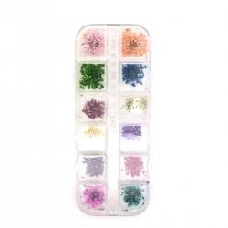 Xara Dry Flower Box No 03